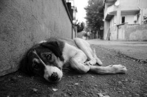 homeless+dog+black+white
